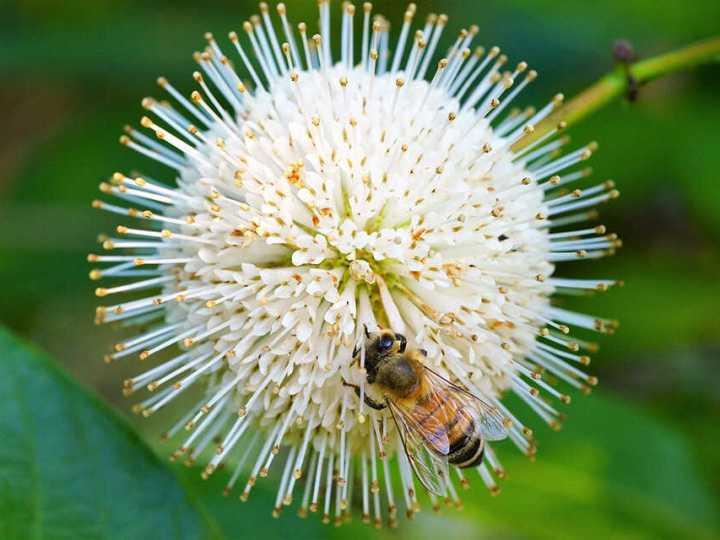 mierea-de-albine