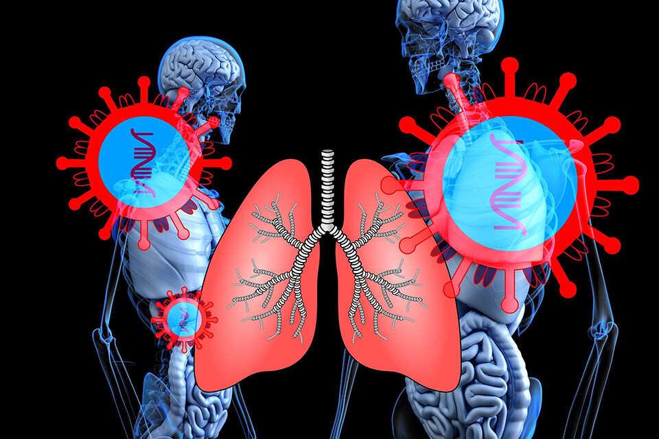 Un virus vegetal ar putea salva plămânii de cancerul metastatic