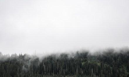 """¿Y qué es lo que trae la niebla? """"Lo que trae la niebla"""", de M. Rubio"""
