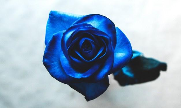 """Los secretos tan solo nos desvelan que nuestra vida es nuestra. """"Cuánto azul"""", de Percival Everett"""