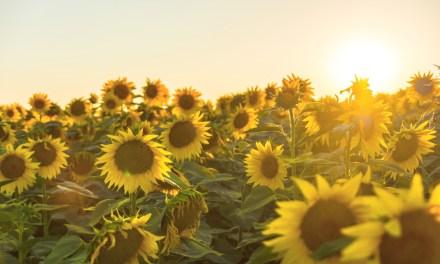 """Morir con los ojos llenos – """"El verano en que mi madre tuvo los ojos verdes"""", Tatiana Ţîbuleac"""