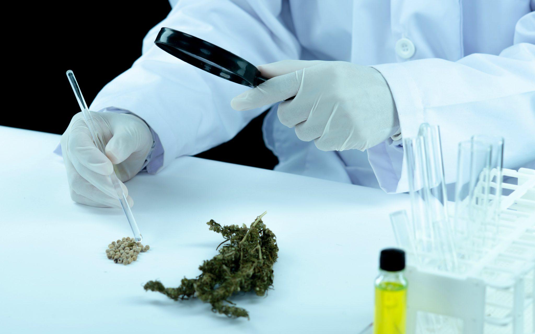 Produtos de Cannabis já podem ser solicitados na Anvisa