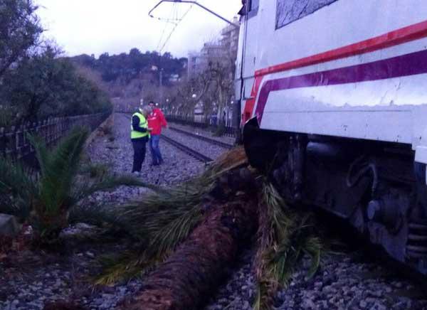 El tren chocó contra la palmera y la arrastró
