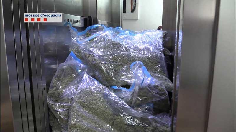 La policía ha localizado 500 kilos de marihuana