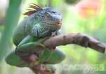 Vida silvestre en El Salvador