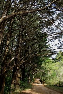 Uno de los senderos del parque