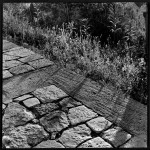 Detalle del camino de subida al Monte Philopappou, 1954-1958. Dimitris Pikionis. ANA-67-55-73. (Fuente: Archivo Dimitris Pikionis, Benaki Museum Athens)