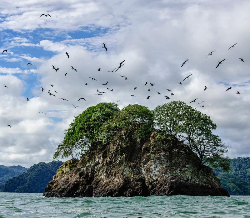manglares colombianos