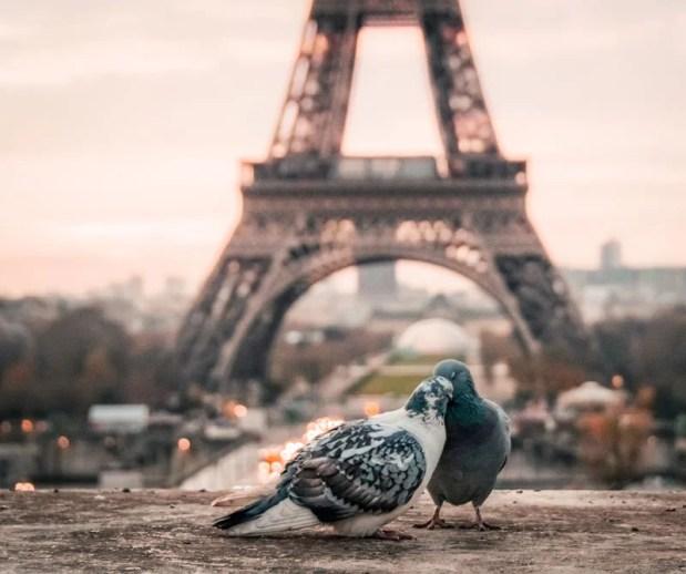 Los ciudadanos del distrito 10, Rue du Buisson Saint-Louis, no soportan la cantidad de palomas, por lo que contrataron aves de caza. ¿Funcionará la idea? descúbralo aquí.