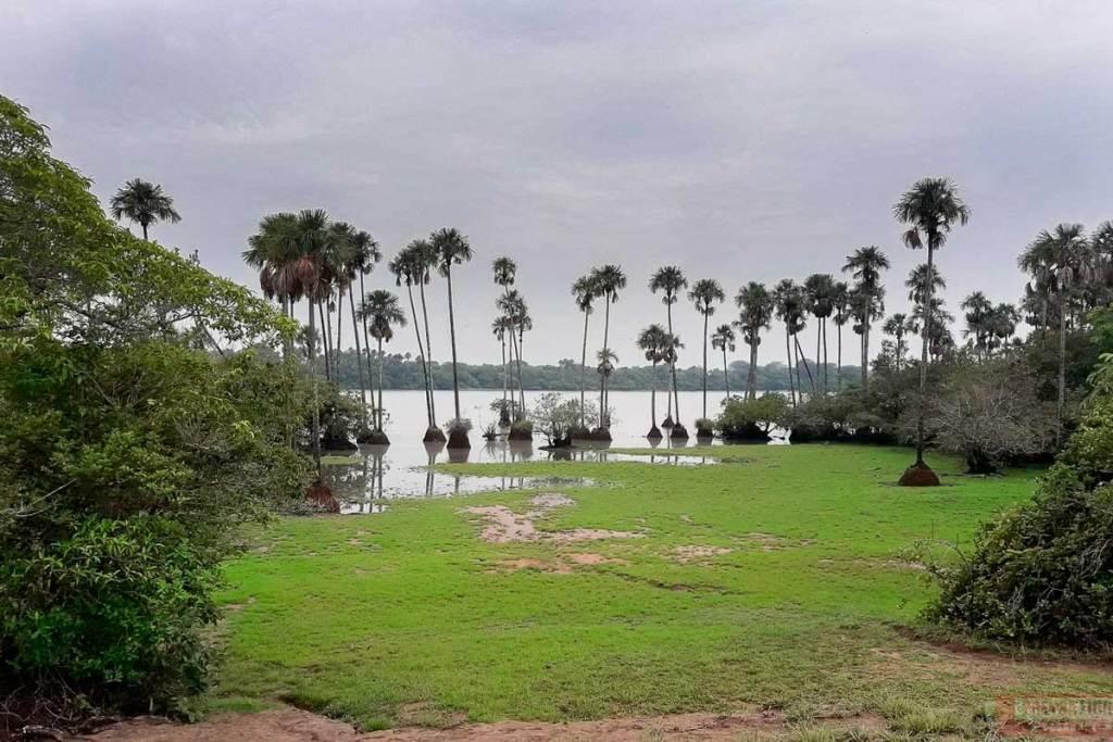 Casanare, Reserva Natural Palmarito,