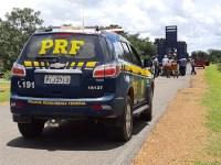 PI: PRF inicia operação para apreender animais nas rodovias do estado