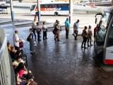 RS: Passageiros de ônibus intermunicipais poderão viajar com pets sem pagar tarifa extra