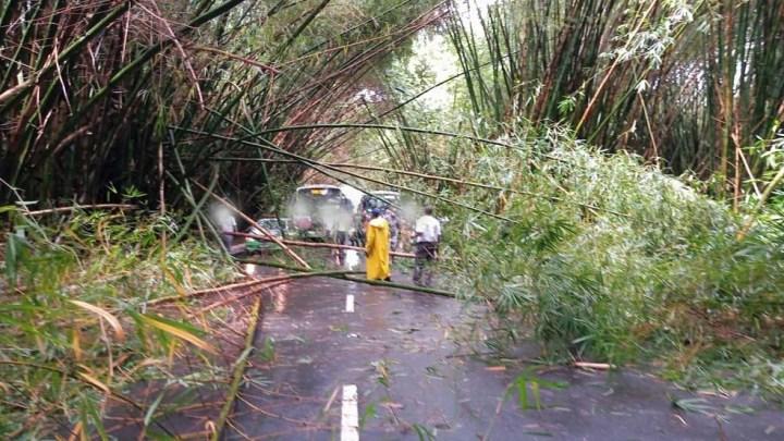Salvador: Bambus que ficam na entrada do aeroporto desabam e interditam o trânsito
