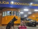 Vídeo: PRF apreende 8kg de entorpecentes durante fiscalização em ônibus na BR-230
