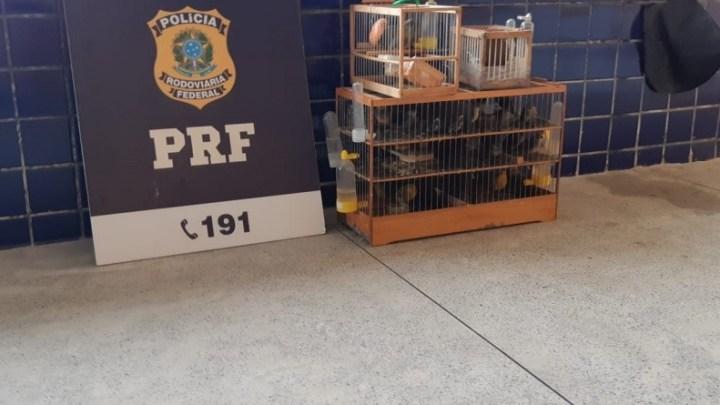 Vídeo: PRF resgata 45 pássaros sendo transportados dentro de ônibus na Bahia