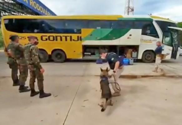 MT: Fiscalização da PRF apreende entorpecente em bagageiro de ônibus – Vídeo