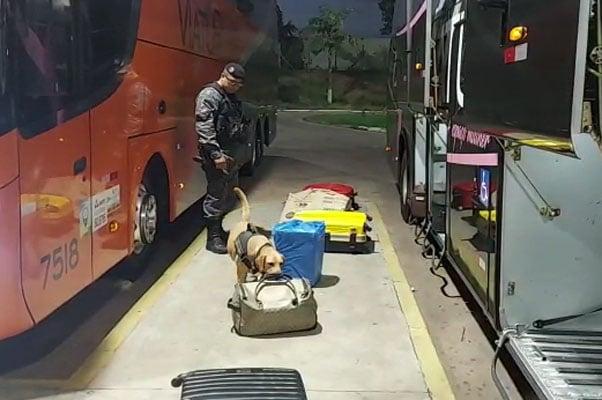 Vídeo: Batalhão de Choque encontra entorpecente em ônibus na Rodoviária de Campo Grande