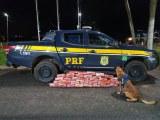 SP: PRF apreende entorpecentes e arma durante fiscalização em Ourinhos