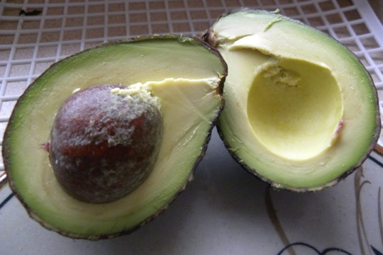 aguacate 28