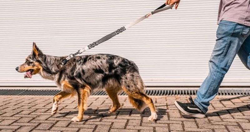 Petlove lança marca Future Pet