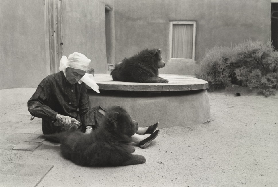 Georgia OKeeffe cepillando sus chow Foto John Loengard 1966