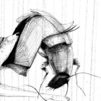 Mirar palomas (animales uruguayos)