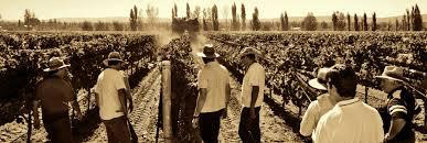 Inauguraron la planta de fraccionamiento de vino más moderna del mundo en su tipo en Mendoza.