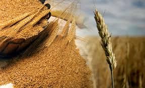 La exportación de harinas, pastas y galletitas es la gran esperanza para el trigo