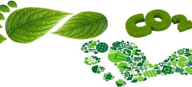 Mercados de C, aliados del desarrollo sustentable.