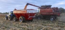 Sube el maíz en el mercado de Chicago y contagia a la soja y al trigo.