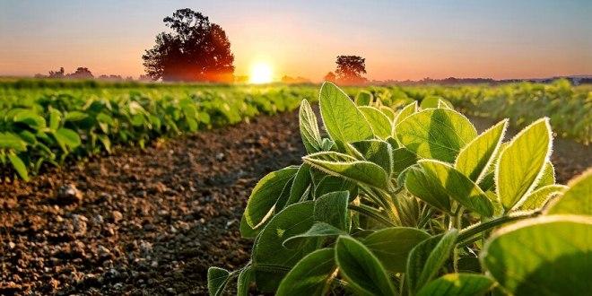 Europa pagará un valor diferencial por soja argentina certificada producida de manera sustentable.