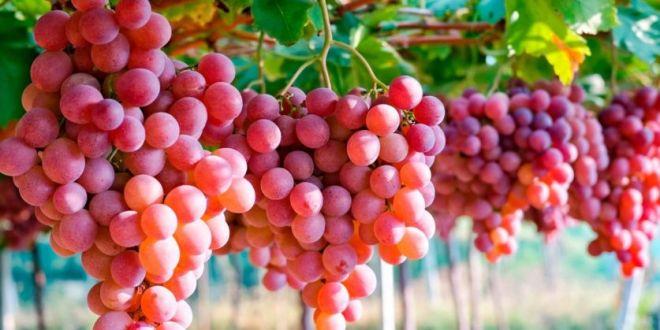 Ahora, las uvas que compras seguro vienen de Perú: ¿por qué Argentina tiene que importarlas?