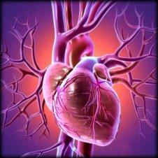 Cardiovascular.11284053_std