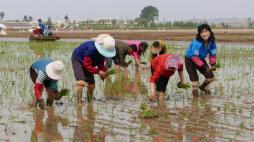 Com quase 94% de autonomia alimentar, Coreia Socialista necessita de apenas uma pequena parte de doação internacional. Crédito: RFA.