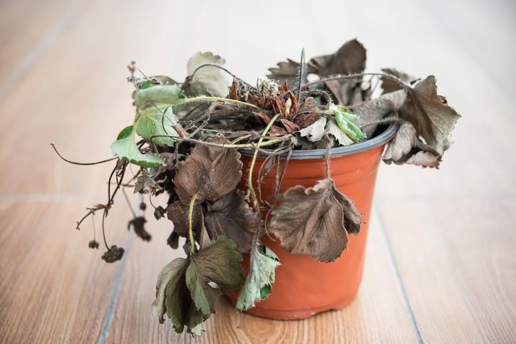 Porque morrem as suas plantas e como evitá-lo? - Revista Jardins