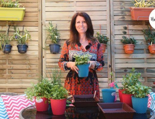Cultivar aromáticas