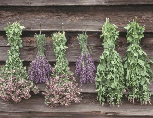 plantas que curam