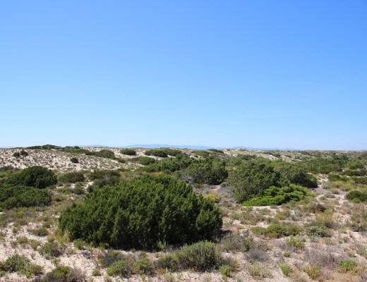 paisagem alentejana