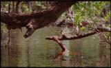 Jonathas de Andrade. O espírito das águas. 2017. Cortesía del artista y de la GALLERIA CONTINUA, San Gimignano / Beijing / Les Moulins / Habana