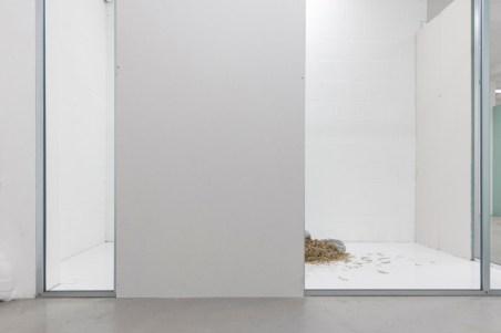 Nicolás Lamas, The Form of Decay. Vistas de la instalación en P/////AKT, Ámsterdam 2017. Fotos: Charlott Markus, Alexandra Colmenares Cossio y Valeria Marchesini. Cortesía del artista y de P/////AKT, Ámsterdam