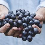 ¿Qué es el vino natural?