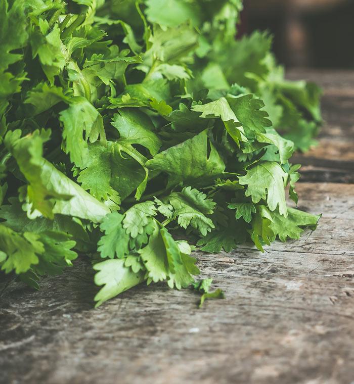 Ingredientes para desintoxicar, cilantro