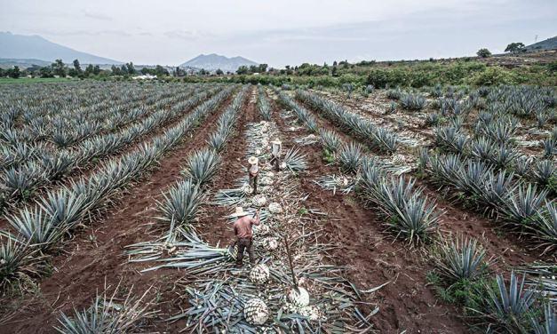 México ya tiene su primer tequila de terruño