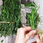 El herbario: Estragón