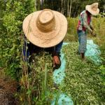 La regulación de la hoja de coca y sus derivados.