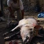 Don Ismael pelando el cerdo ©