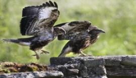 observacion-de-aves