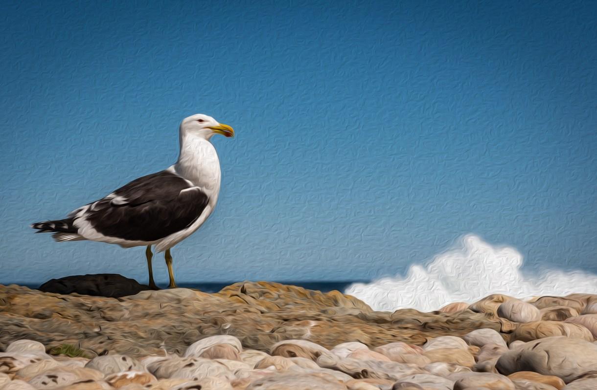 seagull-4023959