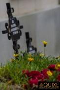 Las flores que crecen en donde está la muerte.