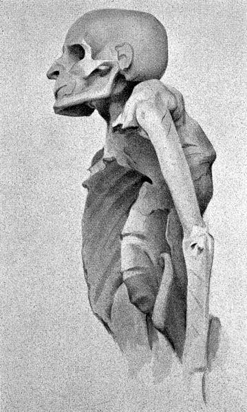 Momia, Sacerdote de Amon (Wikipedia)